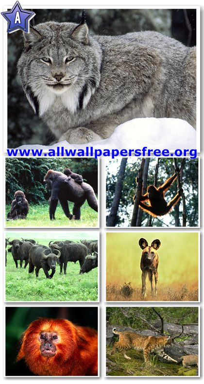 100 Amazing Animals Wallpapers 1600 X 1200 [Set 12]