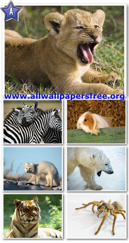 100 Amazing Animals Wallpapers 1600 X 1200 [Set 14]