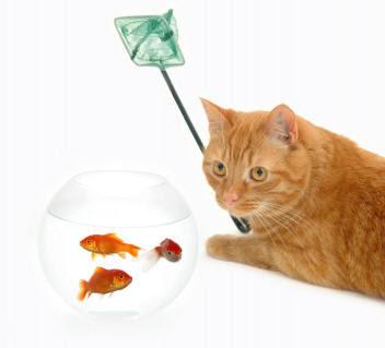 kedi ve balık