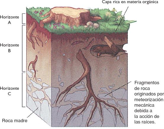 La quimica del suelo xd tipos de suelo for Tipo de suelo 1