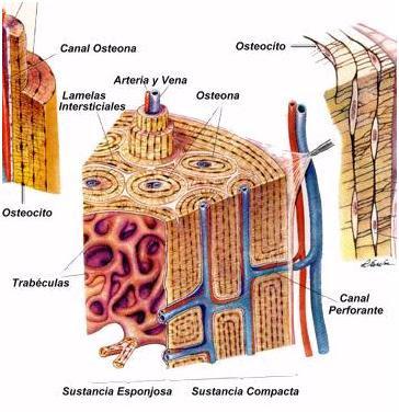 componente molecular celula: