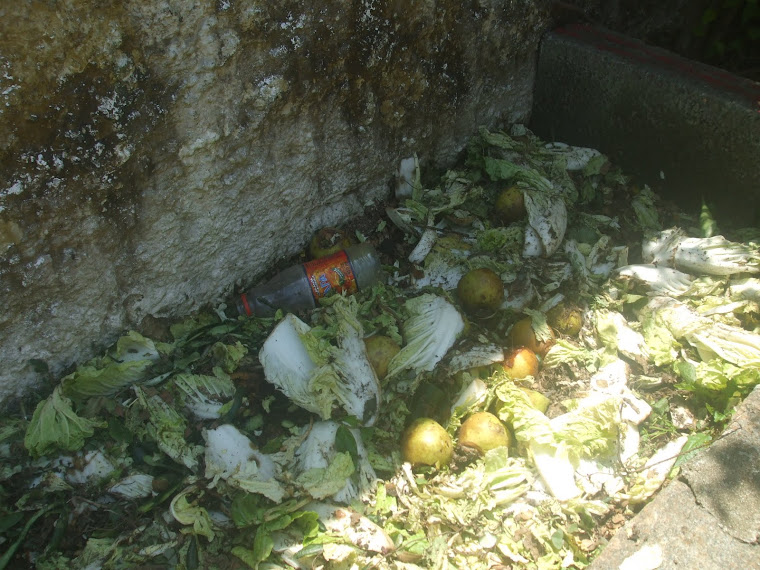 Observação da Composteira na EM Herbert Henry Dow - 27-10-2010