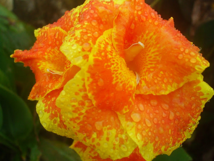 Flores de Casa...