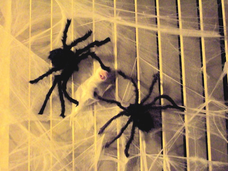 [spiders]