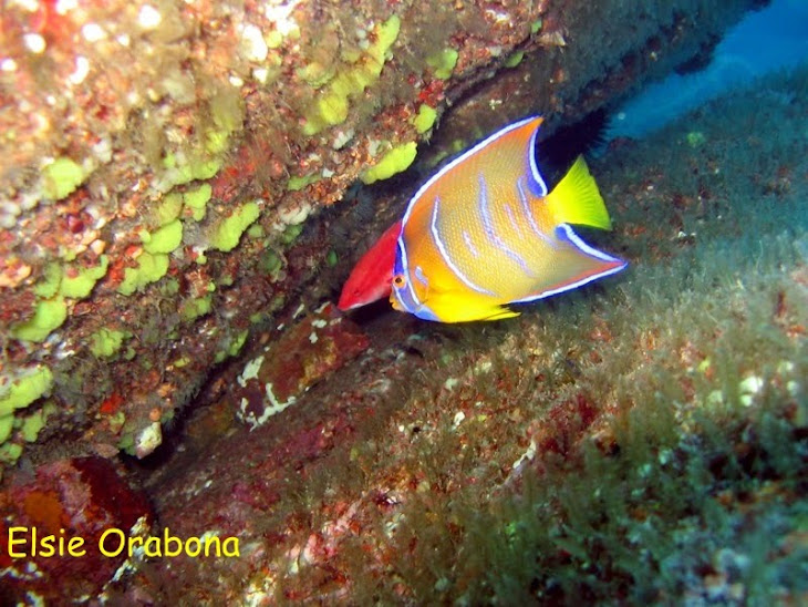 Mergulho em Ubatuba