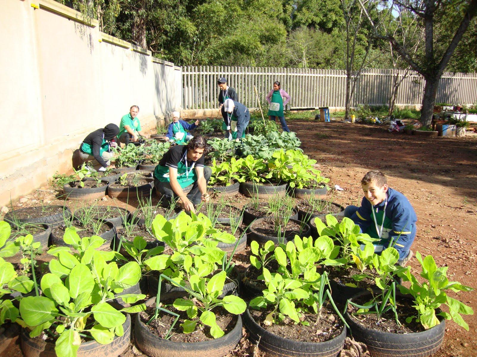 Na horta escolar os alunos acostumam se a conviver com a terra e as  #95BA11 1600 1200
