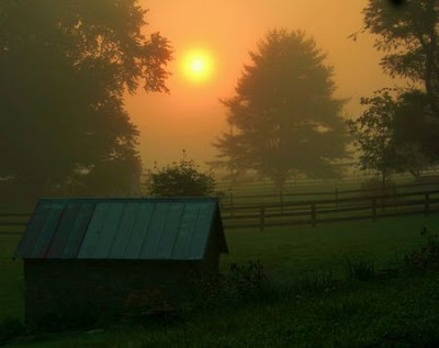 Morning Star by Mitch CATeyes