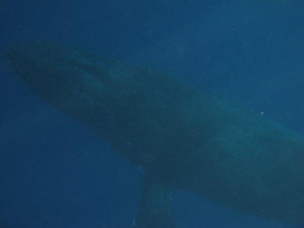 [whaleUW012910]