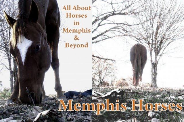 Memphis Horses