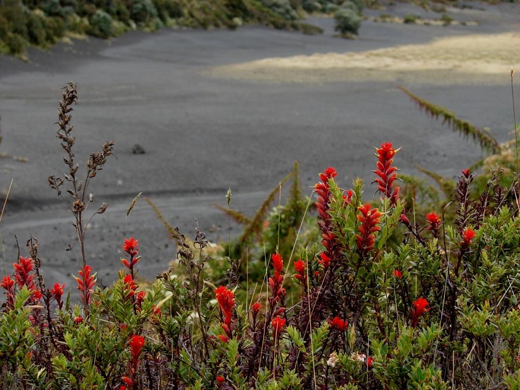 cce331260816 El Parque Nacional Volcán Irazú cuenta con un volcán activo