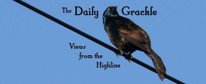 The Daily Grackle