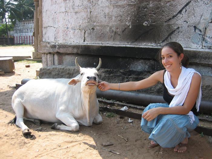 Mahabalipuram - Liiiiebe Kuh :-)