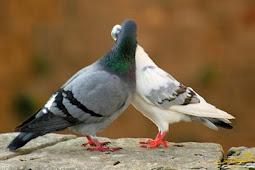 Seandainya Kamu Berkali-kali Mencium Seorang Perempuan, Maka Kamu Tetap Saja Ingin Selalu Menciumnya!!!