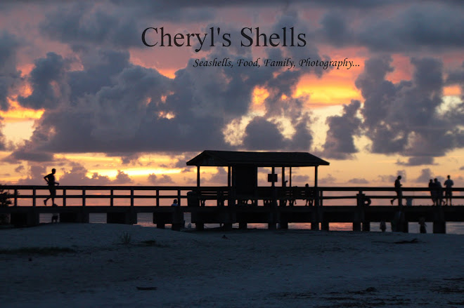 Cheryl's Shells