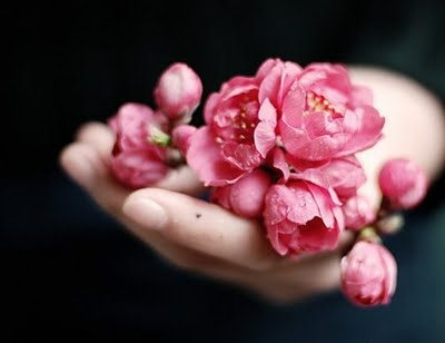 pink flowers for happiness