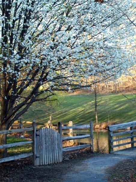 [Spring+Gate.jpg]