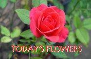 [todays+flowers]