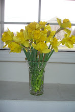 Narcisos