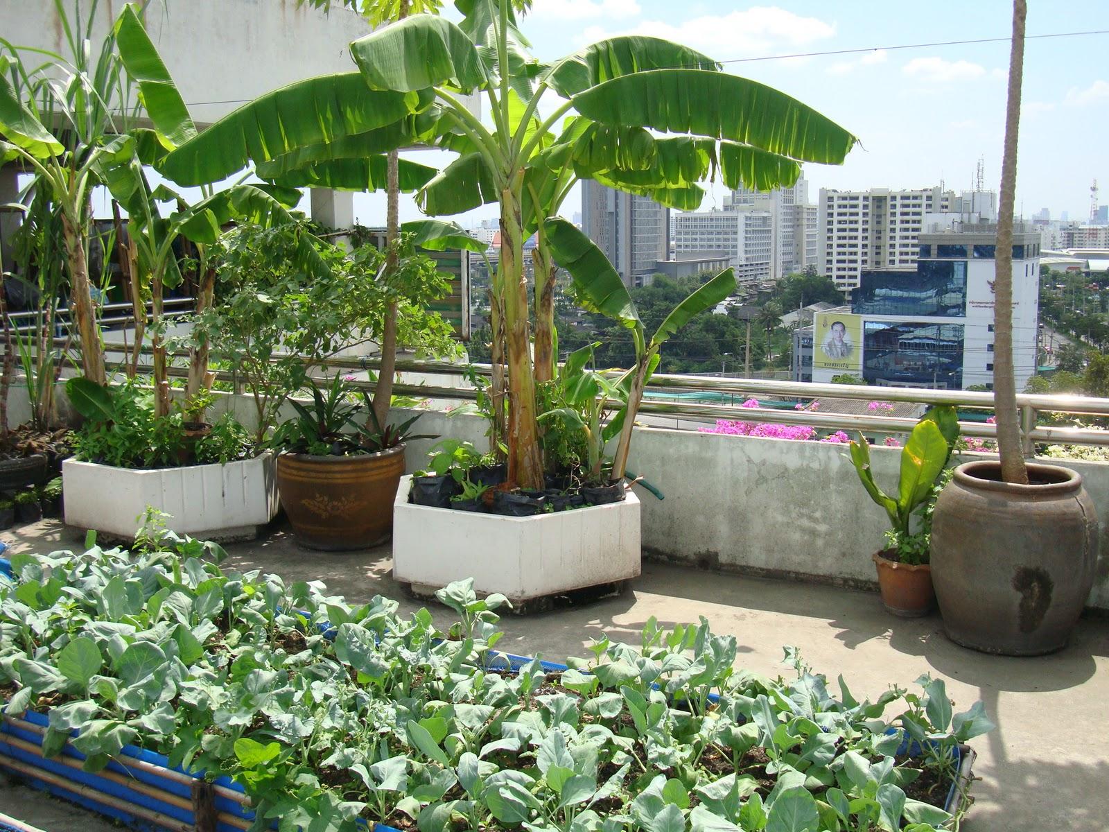 Waiting On The Rainy Season An Echo Asia Blog My
