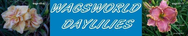 WAGSWORLD  DAYLILIES