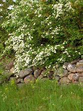 vår stenmur
