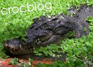Croc Blog The Largest Saltwater Crocodile In The World - Meet worlds largest crocodile caught philippines