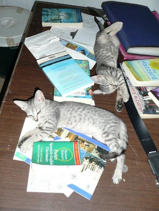 Leo & Luna, booklovers