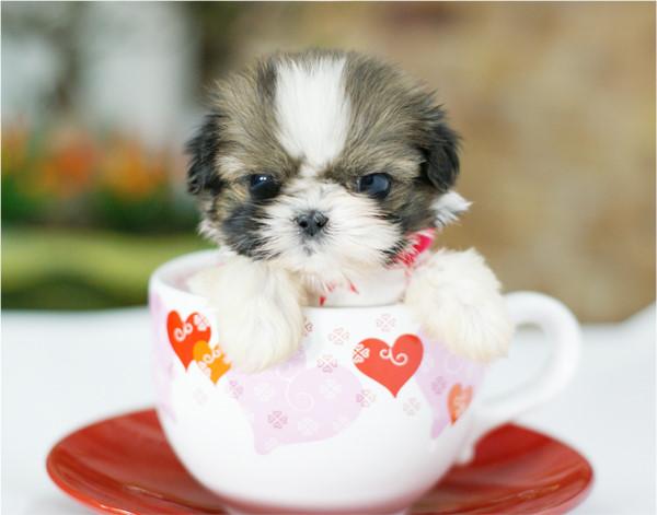 Funz Funz Very Cute Little Puppies