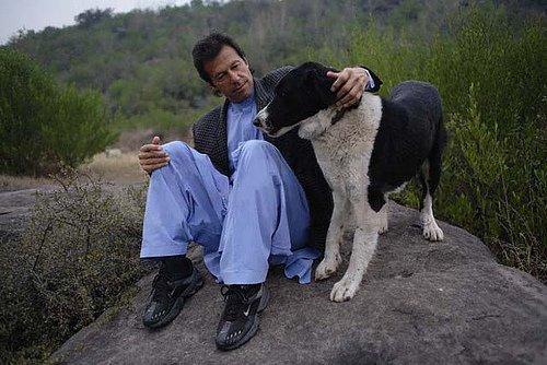 A Dog With A Zani Dog