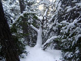 Bosques por la cara Norte