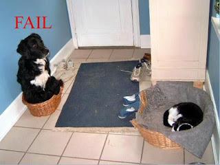 Cachorro cagão, tem medo do gato, e dá...Sua cama...¬¬