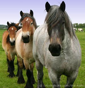 [Image: Horses_000000645200Small.jpg]