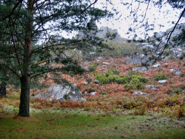 Paisagens de Portugal - Pico da Nevosa - vegetação da montanha