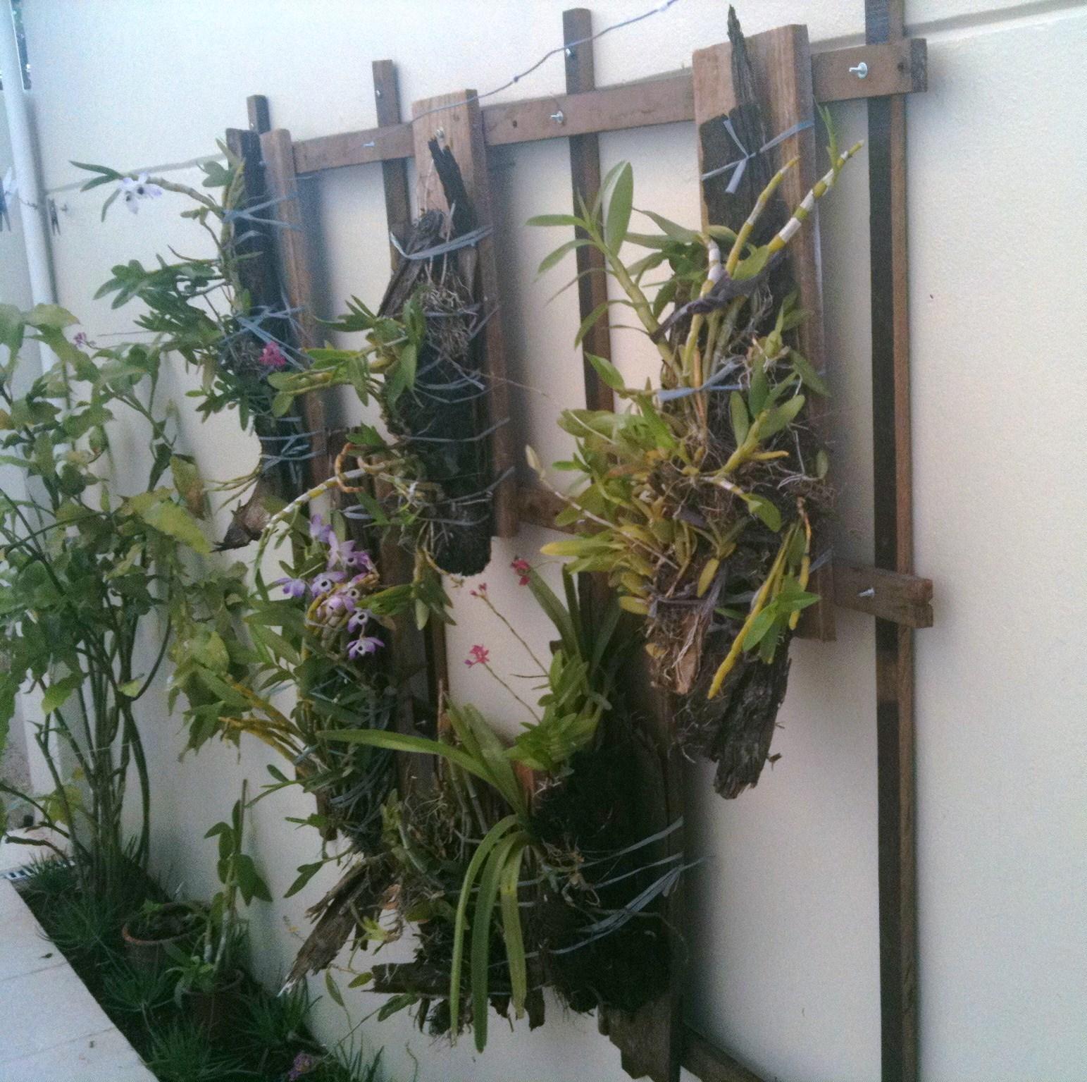 #696943 Verde Jardim: Suporte para orquídeas 1543x1535 px caixas de madeira para orquideas @ bernauer.info Móveis Antigos Novos E Usados Online