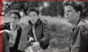 The three boys look at the bobcat