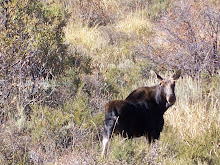 Idaho Deer Scout