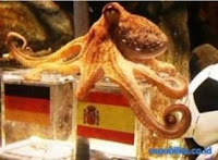 Octopus Paul Germany vs Spain Prediction