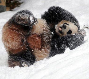 Foto Binatang Lucu Tahun 2010