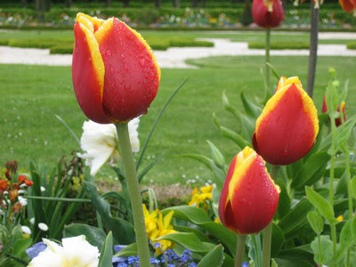 Tulipanes en los jardines de Schloss Charlottenburg