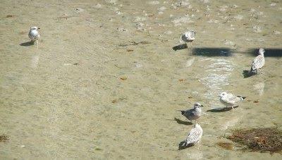 Los descendientes de 'aquellos pájaros'