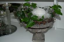 Murgröna i stor urna