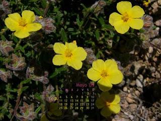 Wallpaper mayo 2009 - Mes de las flores