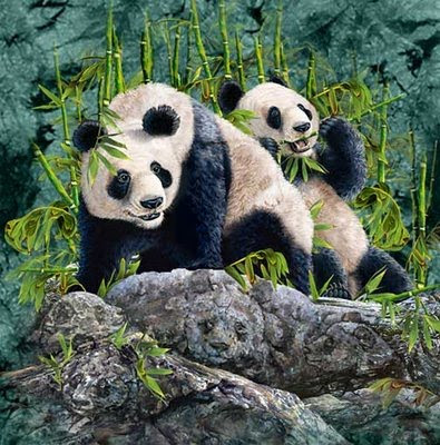 Pandas illusion - Hidden Pandas Illusion