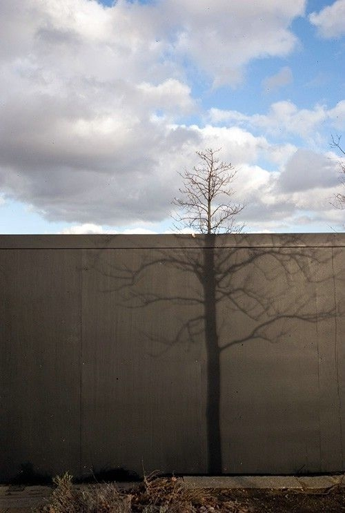 Tree and Shadow Illusion