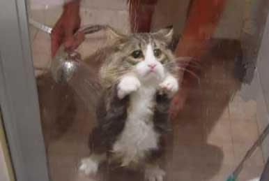6-sad-cat-takes-a-shower.jpg