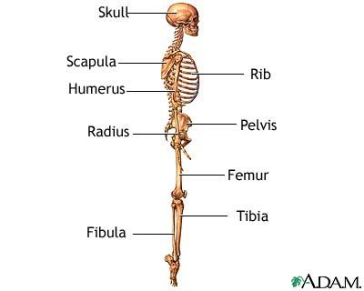 صورة الهيكل العظمي - منظر جانبي