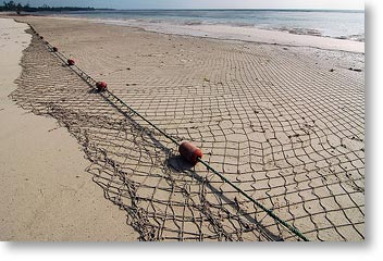 Thatguykp drop your nets for Drop net fishing