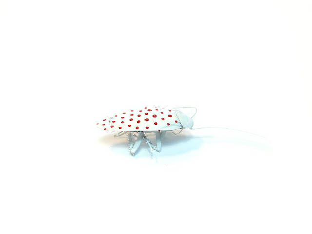 Doted cockroach