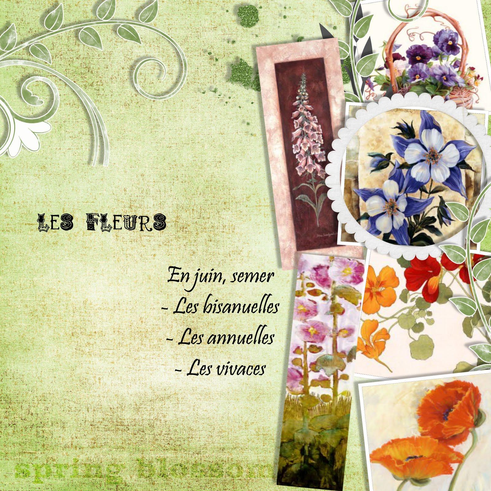 Jardin parfum juin 2010 - Semer roses tremieres septembre ...
