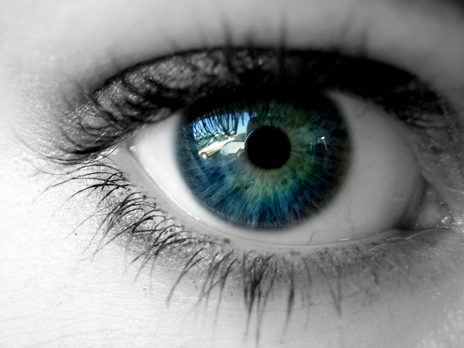 http://3.bp.blogspot.com/_F-WURB3XYwA/TS2CSix6uqI/AAAAAAAAAQw/AVmljH19ULQ/s1600/Eye_by_BaisteachCeilteach.jpg